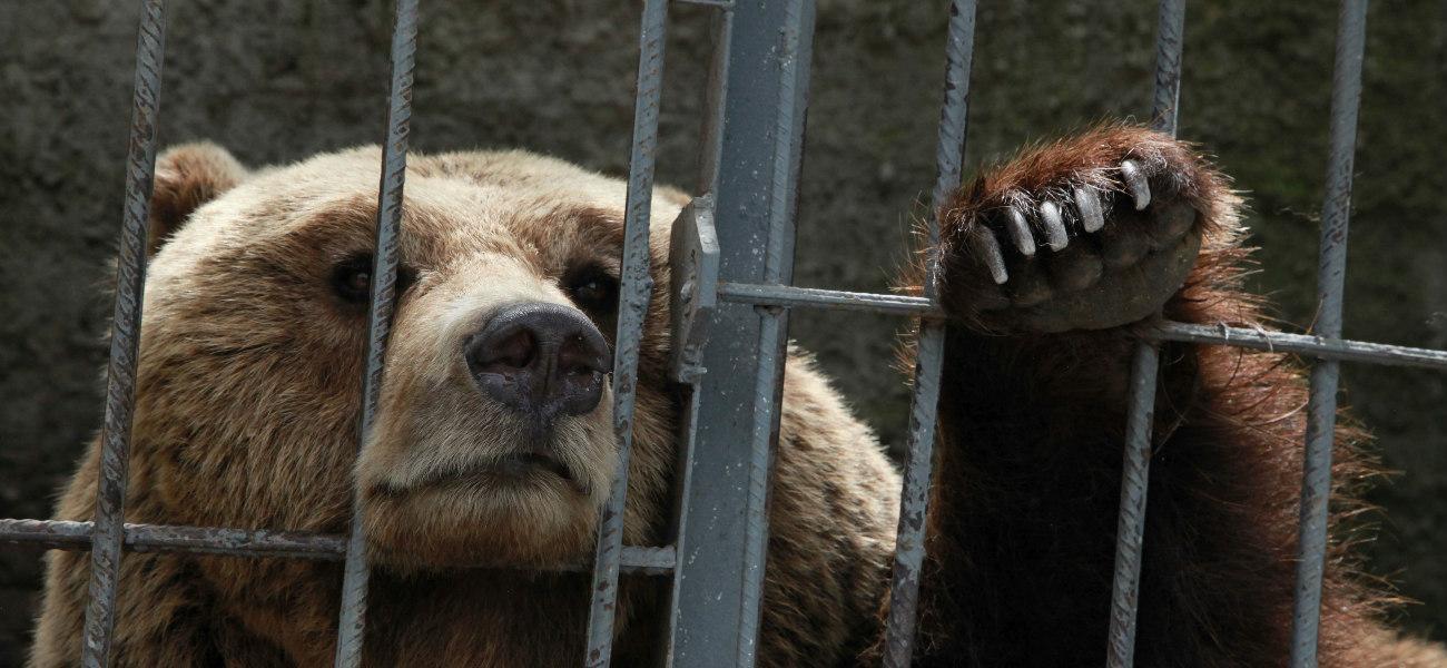 saddest bears Albania