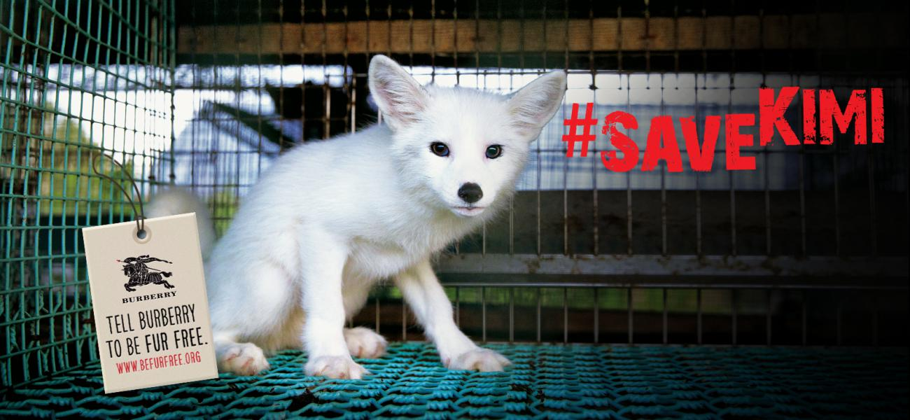 Kimi zal sterven voor Burberry! #savekimi