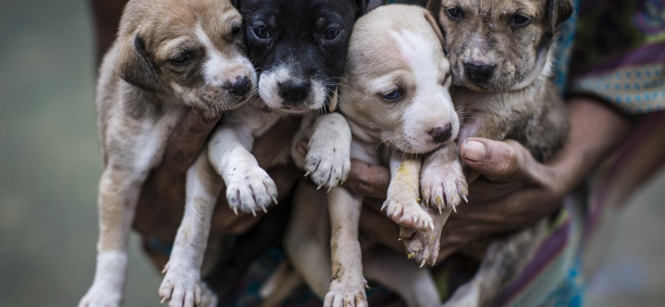 stray dogs puppies