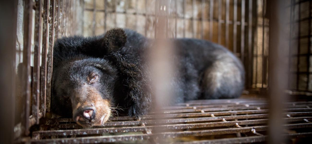 End the cruel wildlife trade now