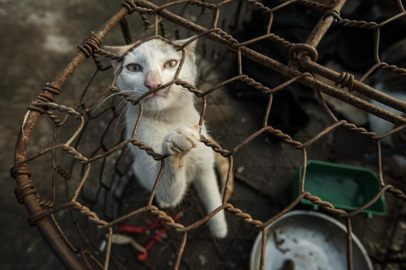 Help us end the dog and cat meat trade
